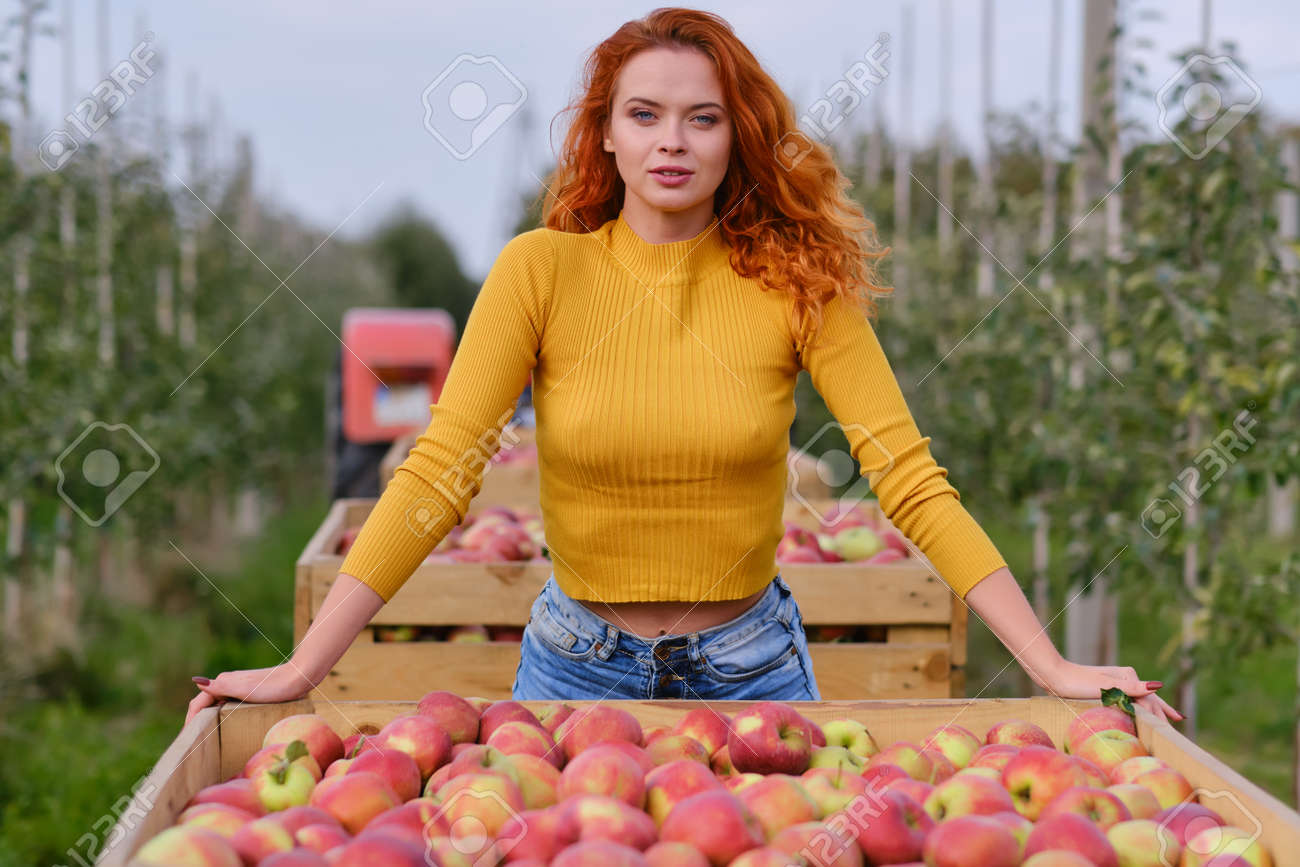 Beautiful girl with red hair collects apples in a large apple orchard and puts in a basket. - 163303243