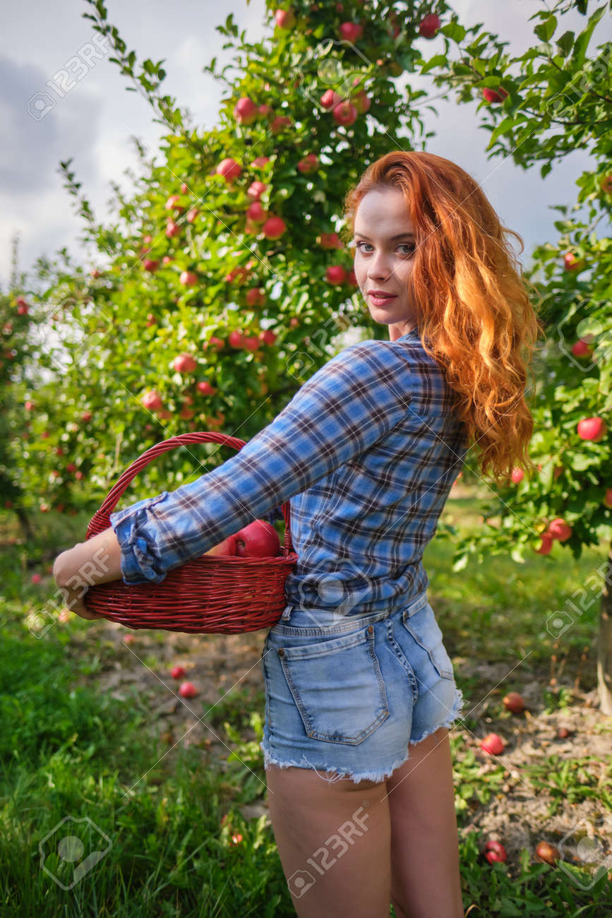 Beautiful girl with red hair collects apples in a large apple orchard and puts in a basket. - 163304204