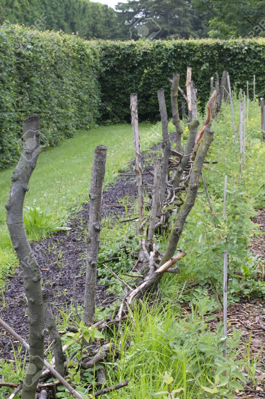 Jardin potager avec clôture rustique et haies