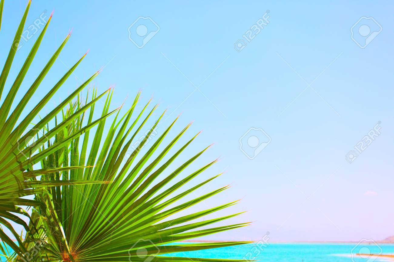 Palm leaves and sea, may be used as background Stock Photo - 4979849