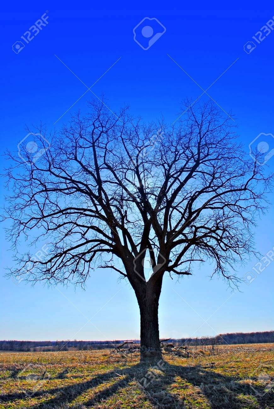 A tree under a blue sky reflecting shadows on the ground Stock Photo - 862644
