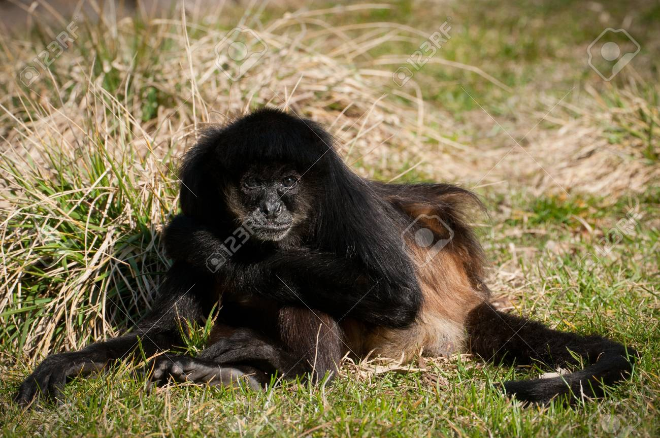 A monkey in a zoo, game and asking for food Stock Photo - 12844039