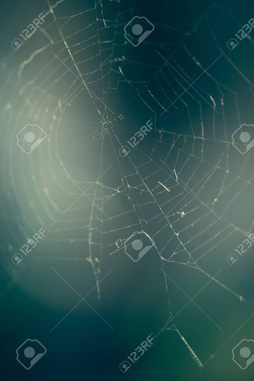 Close up of spider web with blurred background - 121353359