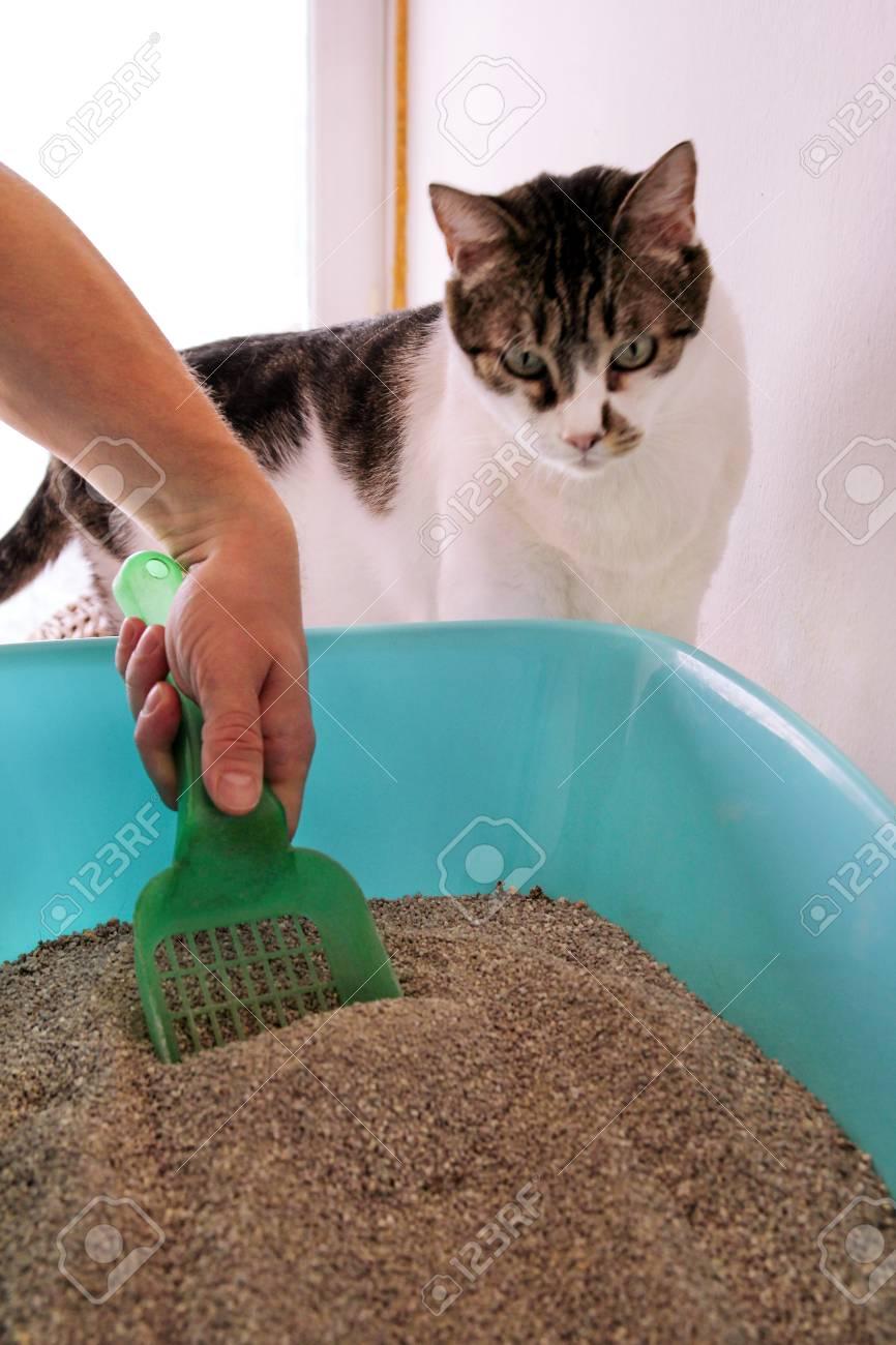 Immagini Stock Pulizia Della Lettiera Per Gatti La Mano è La