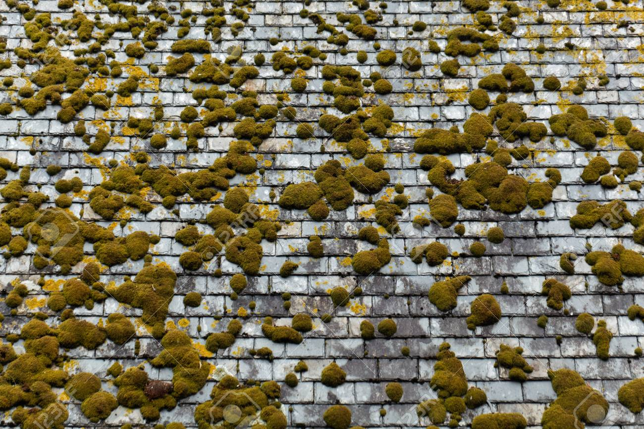 A moss covered roof of natural building stones
