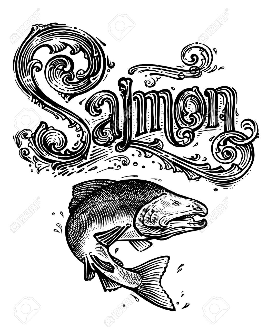 Salmon, vector logo and illustration. Vintage graphics and handwork. Drawing with an ink pen and pencil. The salmon jumps out of the water and a vintage logo. A collection of beautiful logo and words. - 165133134