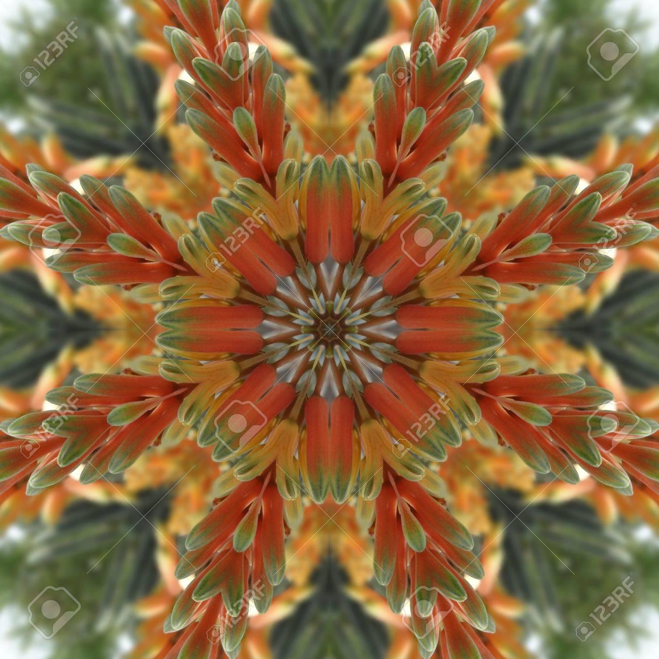 Bright Floral Mandala Stock Photo - 13606373