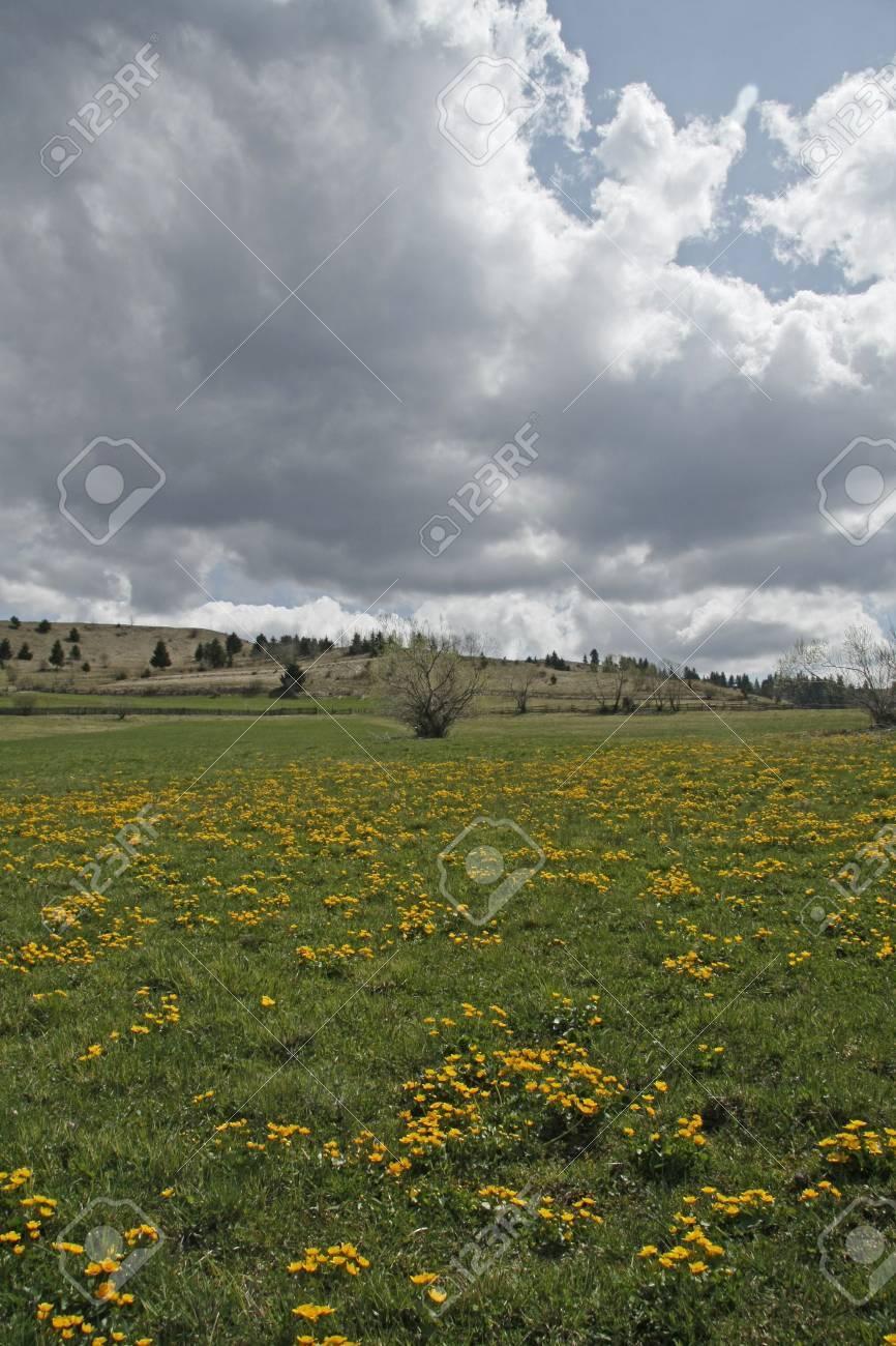 spring landscape Stock Photo - 4749340
