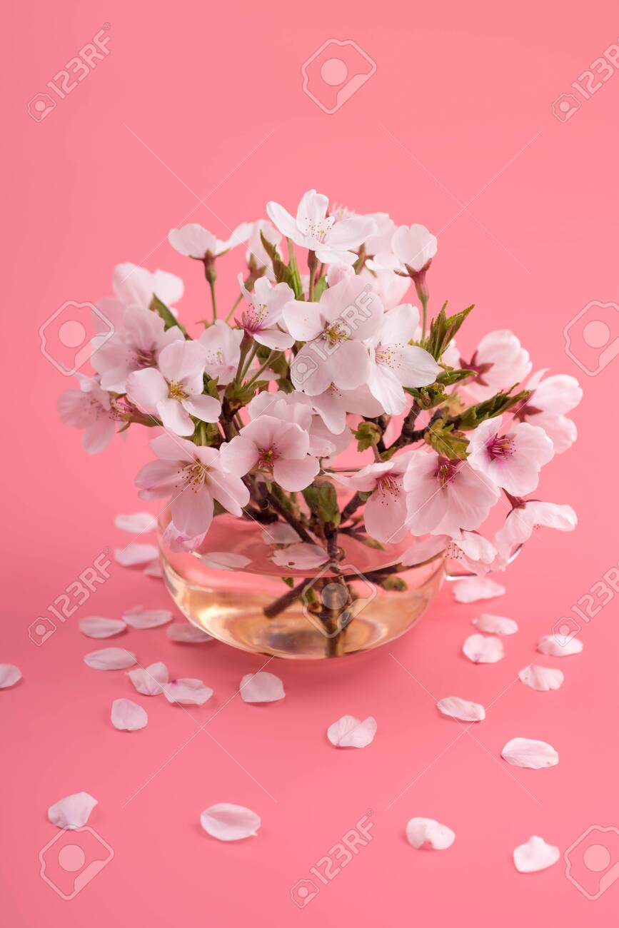 Cherry blossoms in a glass - 144853292
