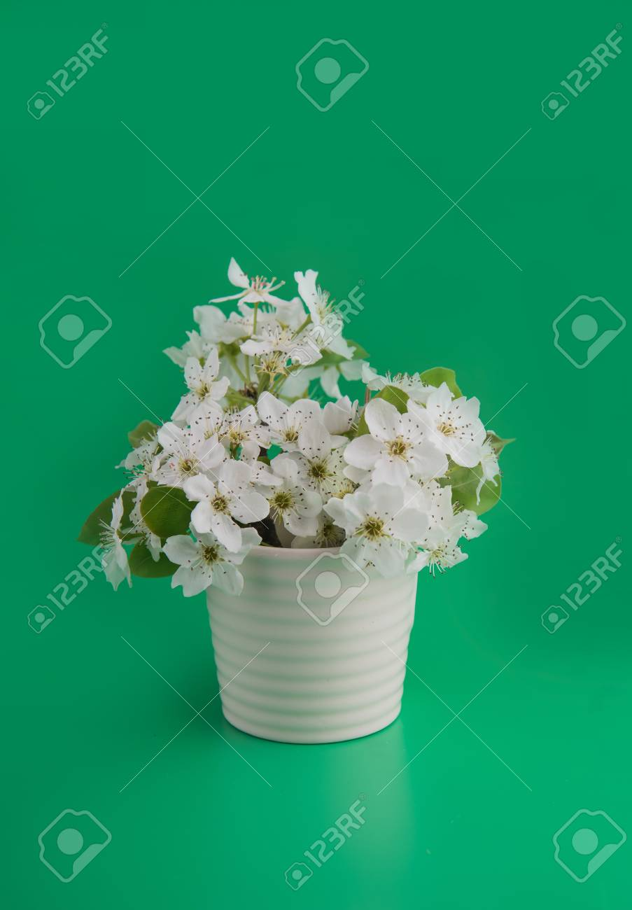 Indoor shooting of pear flowers - 111010795