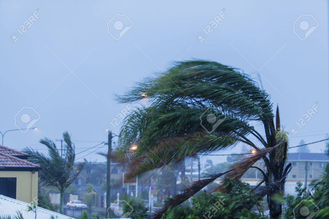 Palm tree in cyclonic wind Stock Photo - 18456164