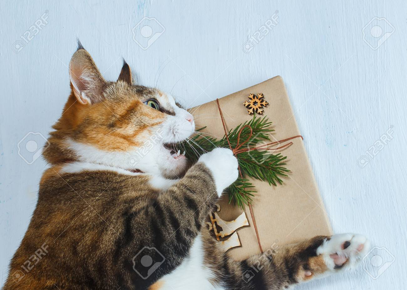 Stock Photo - The cat wants to open a Christmas gift.