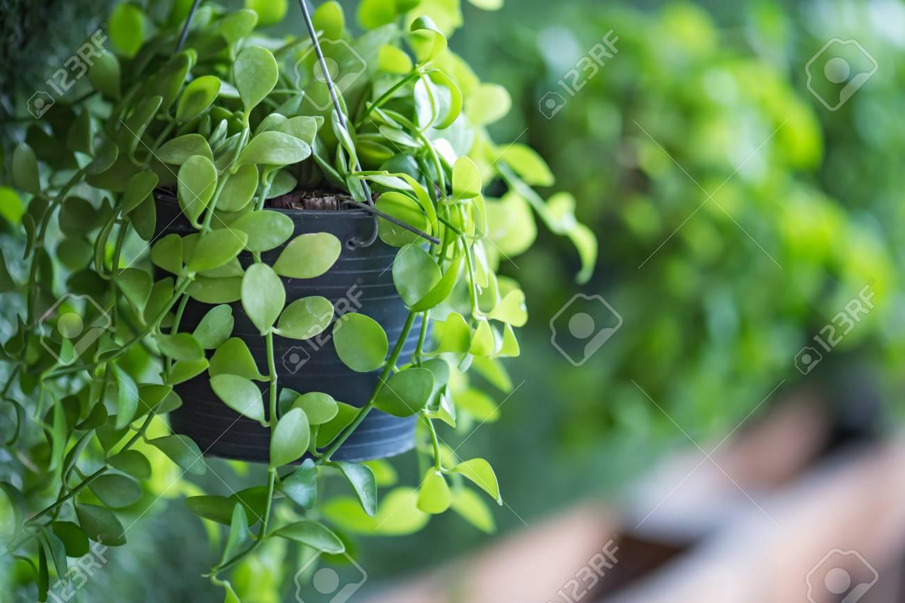 Gros Pot Fleur Plastique gros plan de la plante verte en plastique pendaison pot de fleurs à bord de  jardin vertical