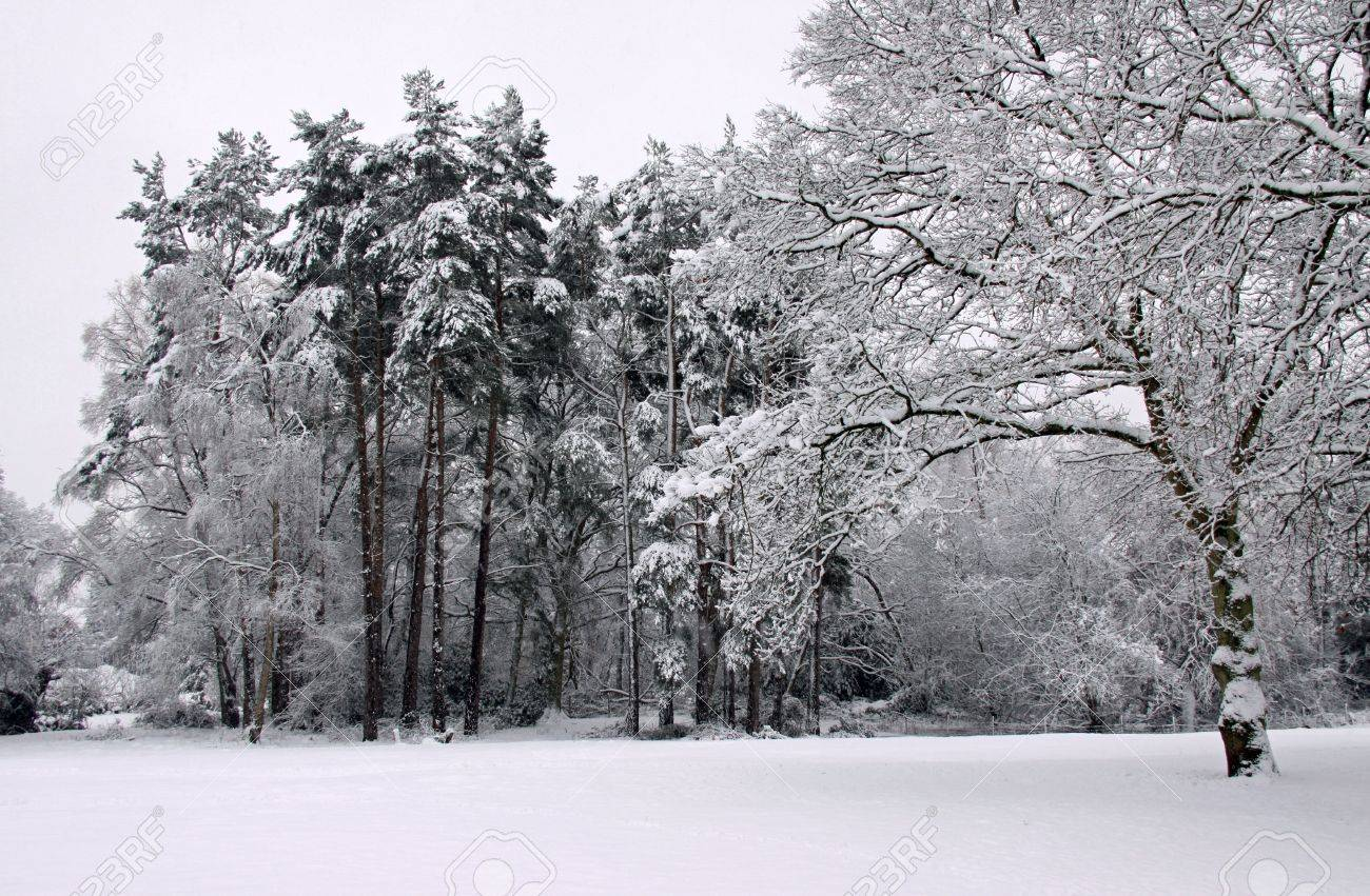 Cold Winter Landscape Of Forest Trees Under A Blanket Of Heavy Stock Photo Picture And Royalty Free Image Image 6408783