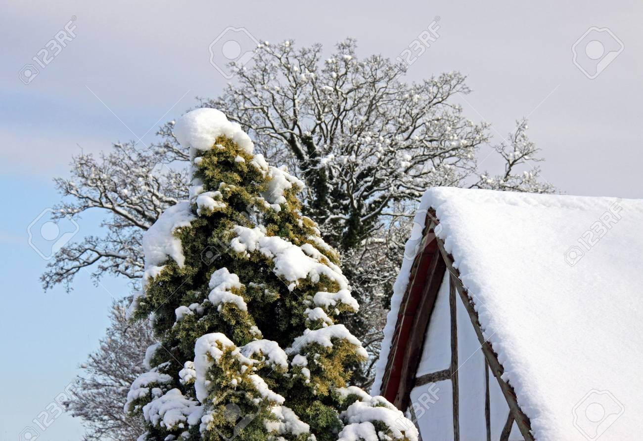 Rural view of an old oak beamed house and trees in winter snow Stock Photo - 6423785