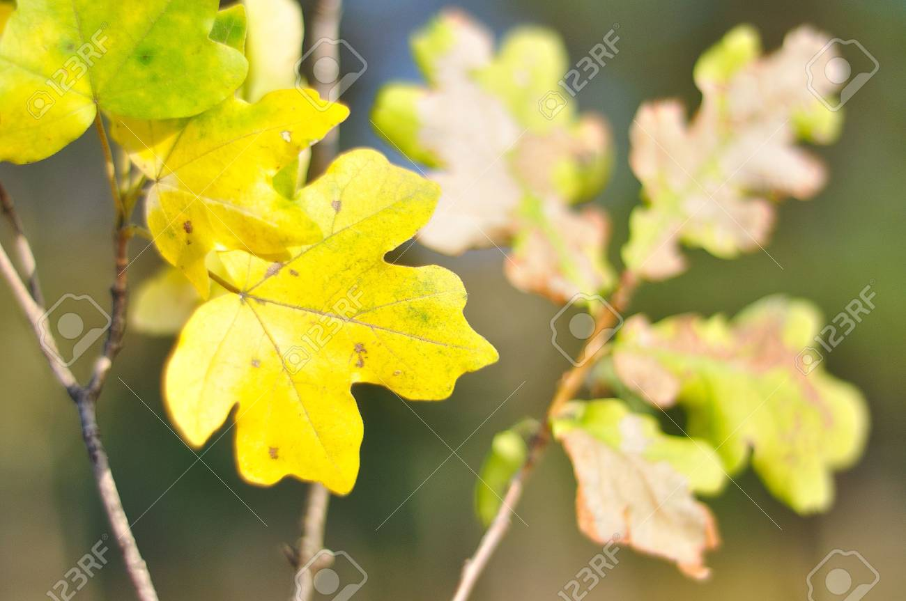 Fall details, leaves, colors, yellow, brown and other Stock Photo - 5555072