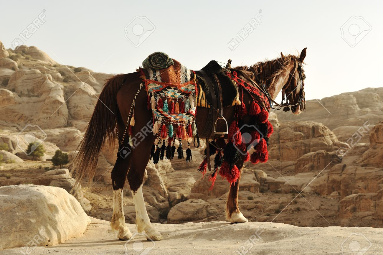 Arabian Horse In Petra With Traditional Clothes Jordan Stock Photo Picture And Royalty Free Image Image 10317017