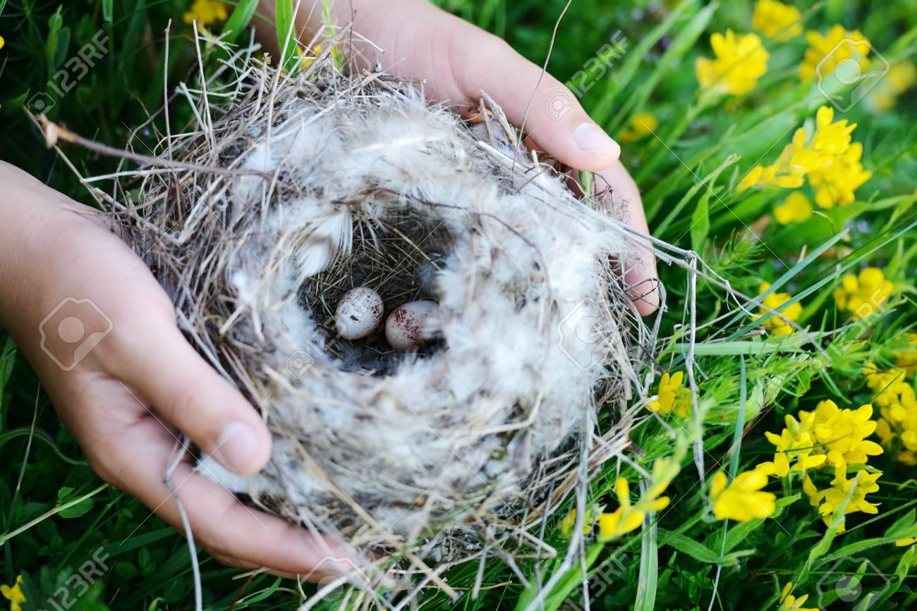 Bird nest with eggs Stock Photo - 18703302
