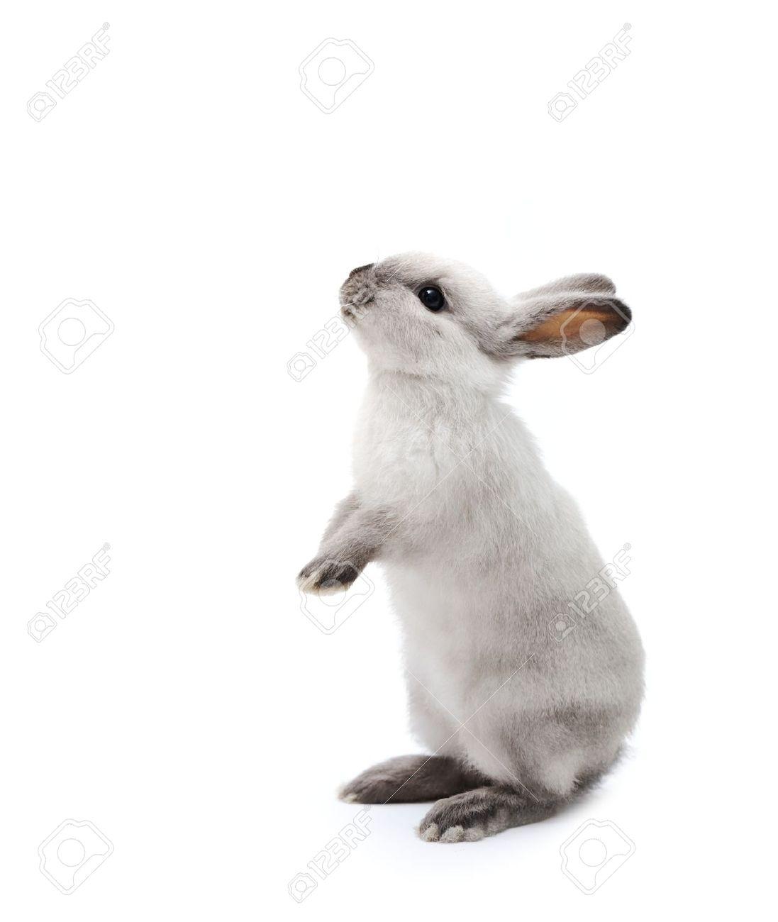 Petit lapin sur blanc Banque d'images - 26328629