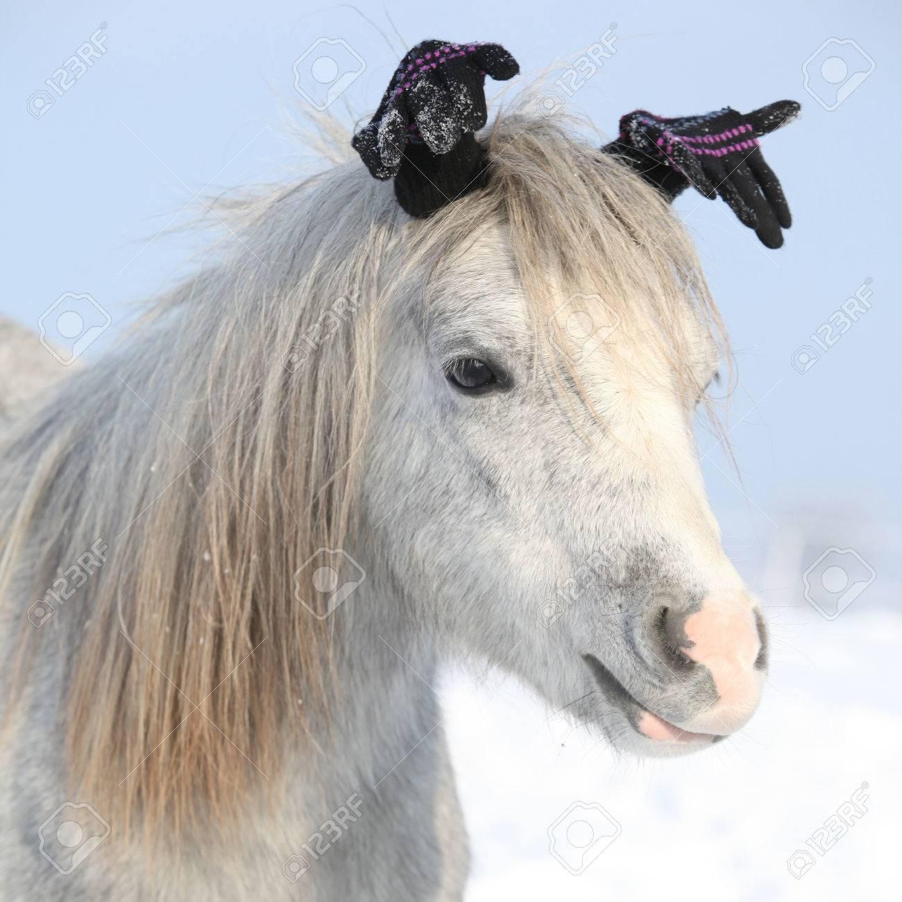 poney drole