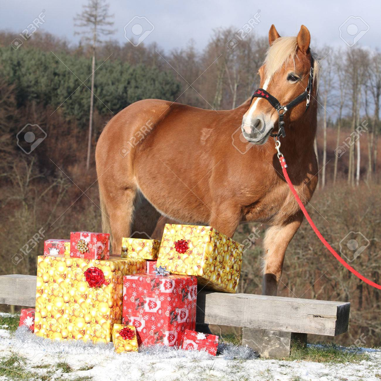 Christmas Horse Tack.Beautiful Chestnut Horse With Christmas Gifts Outside