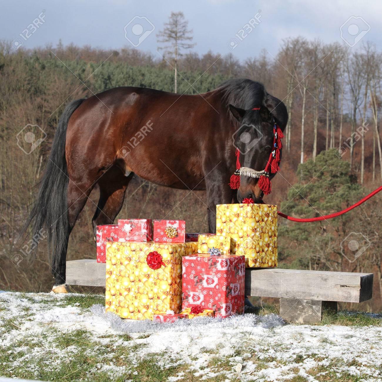 Schöne Braune Pferd Mit Weihnachtsgeschenken Außerhalb Lizenzfreie ...