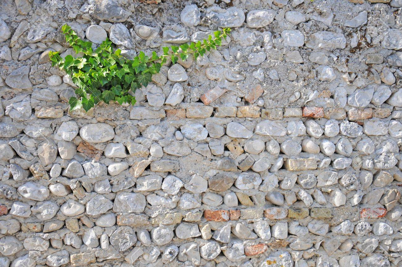 ivy growing on a brick wall Stock Photo - 17095801