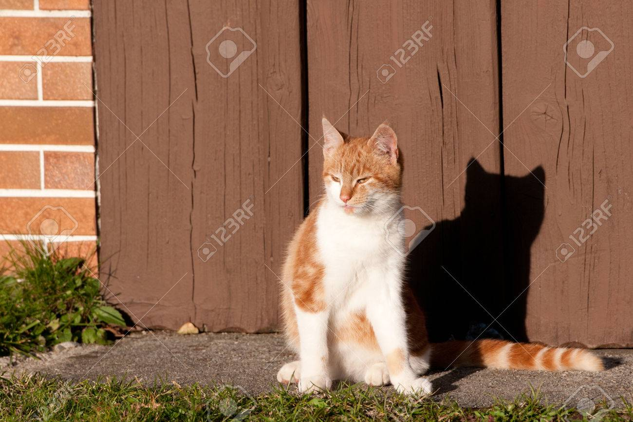 Tabby Cat Sitting In Front Of A Wooden Garage Door On A Sunny