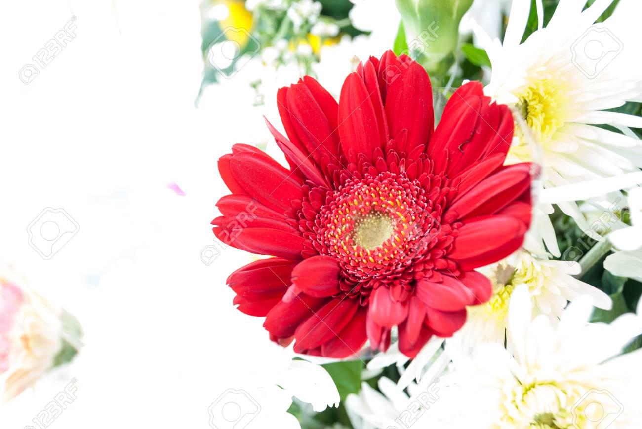 Belle Fleur Rouge Avec Des Petales Banque D Images Et Photos Libres