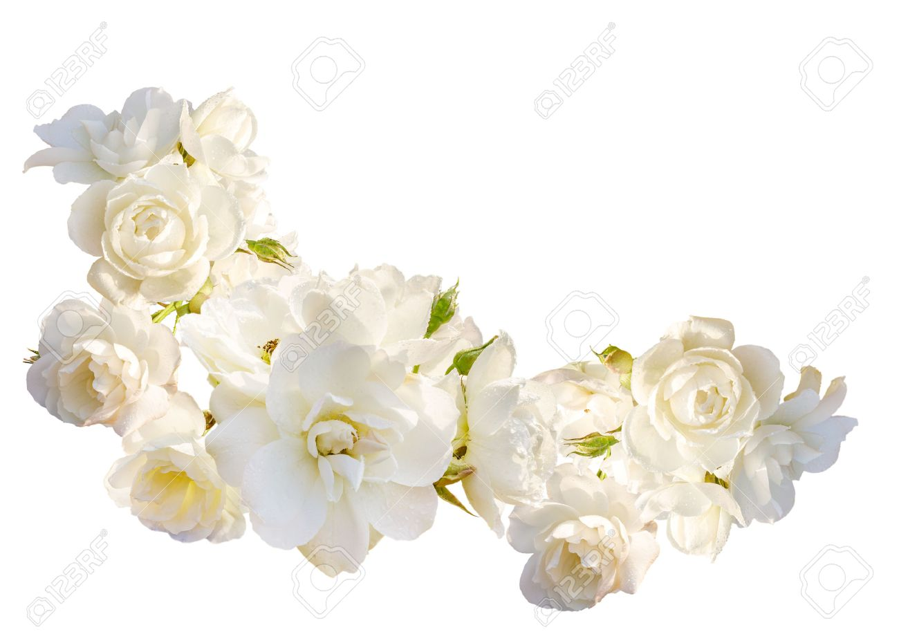 Beautiful Horizontal Frame With Bouquet Of White Roses With Stock