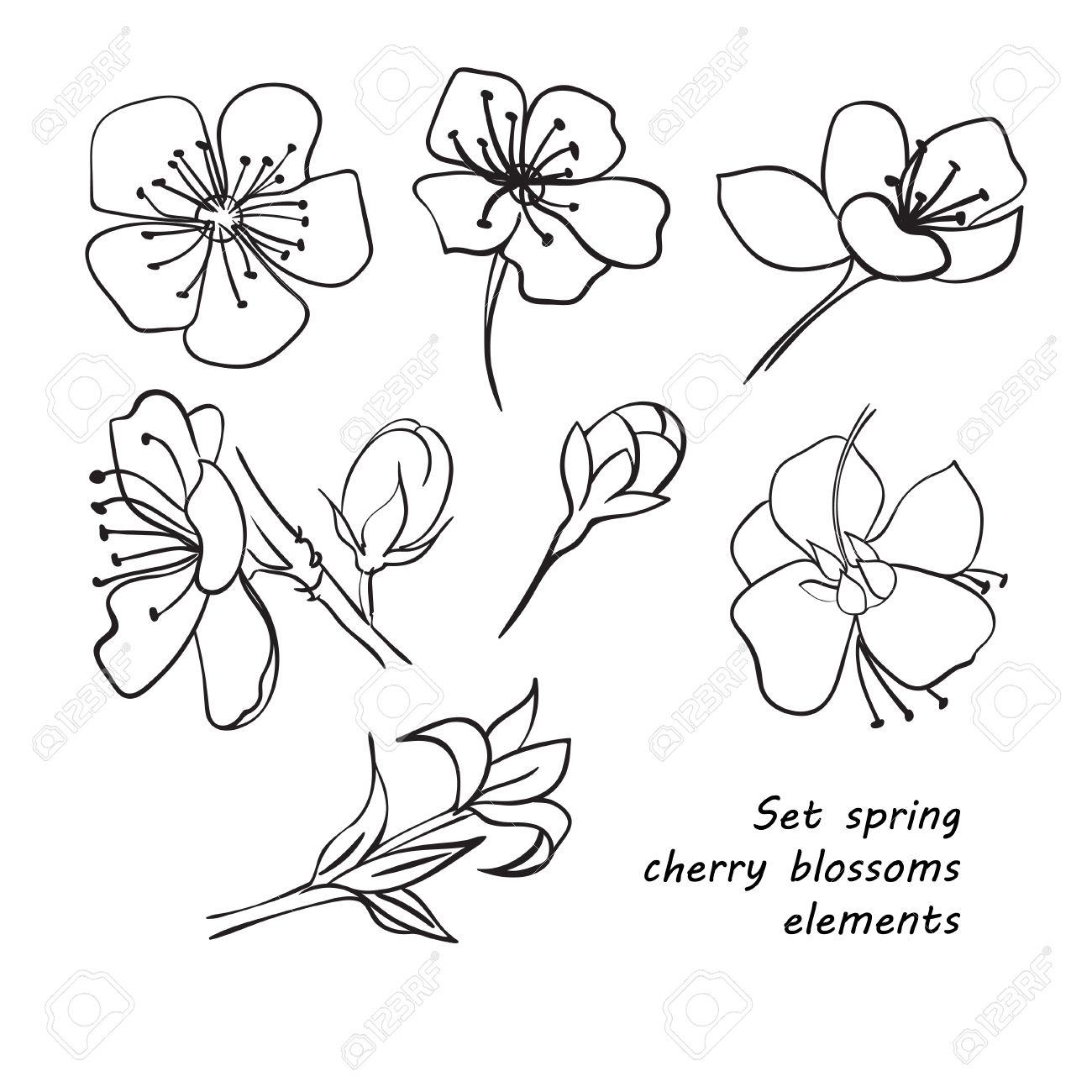 Set De Fleurs De Printemps Fleurs De Cerisier Dessin à La Main Noir Et Blanc Vector Illustration