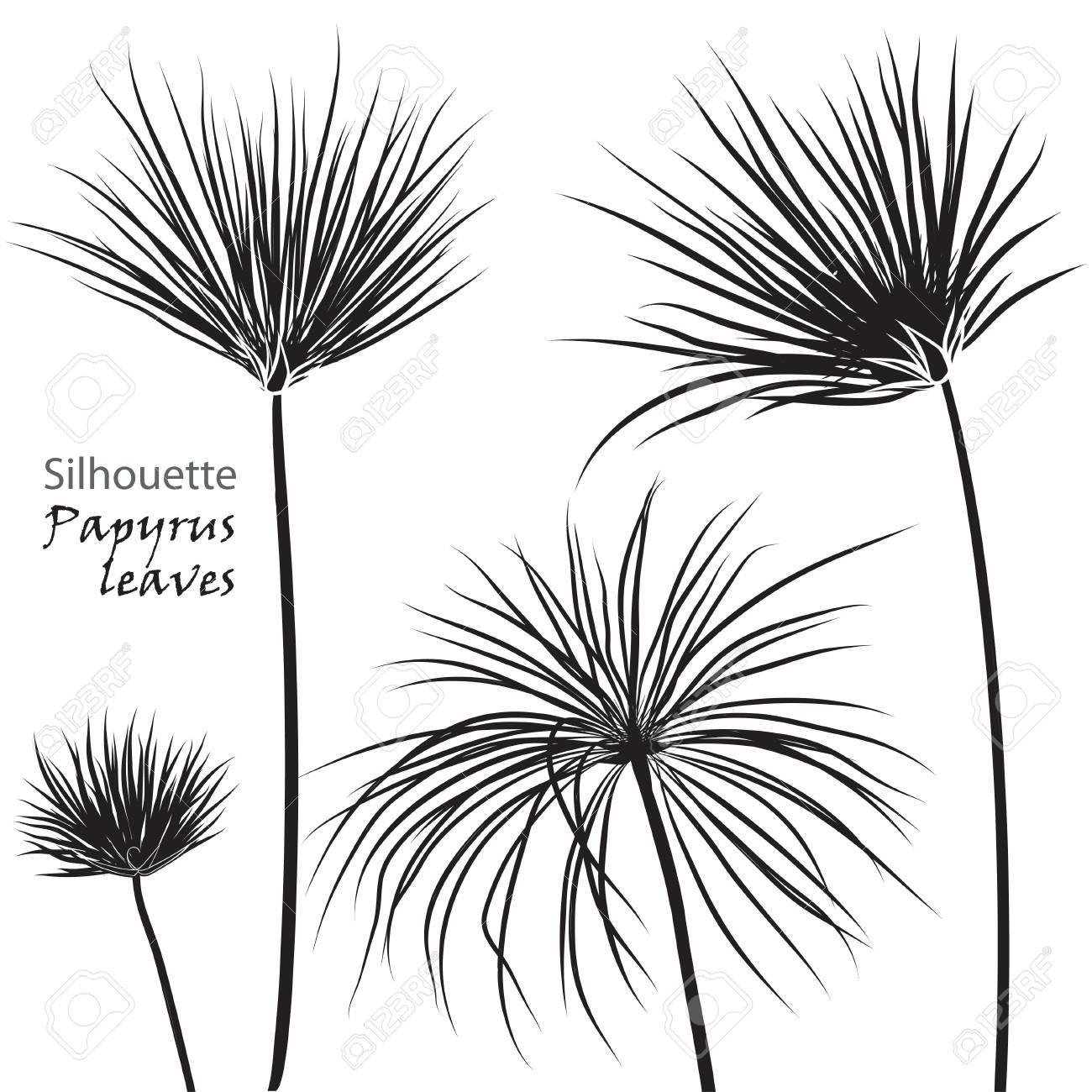 Feuilles De Papyrus Palm Tropical Silhouette Noir Isolé Sur Fond Blanc Illustration Vectorielle