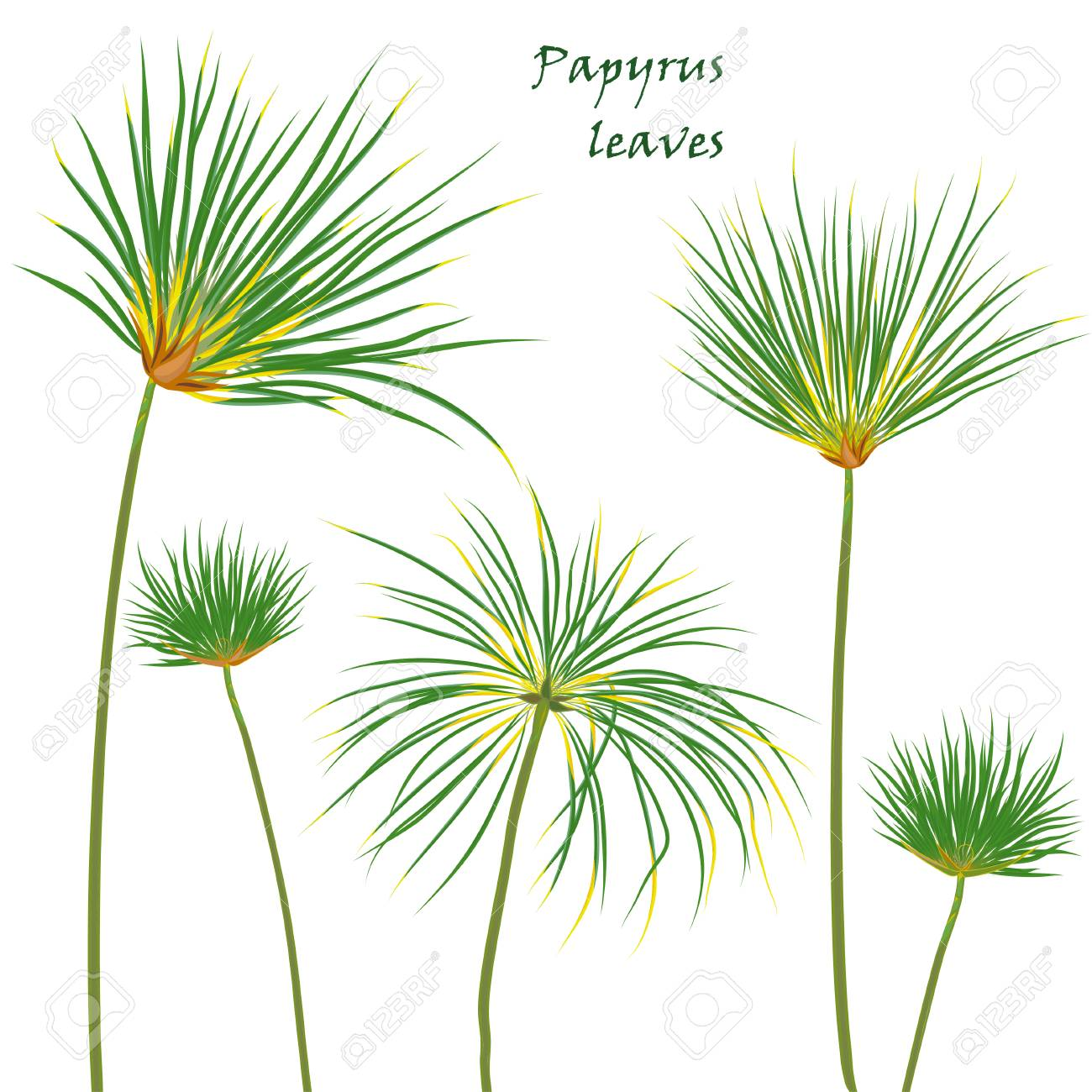 Set Tropical Palm Papyrus Leaves Realistic Drawing In Flat Color