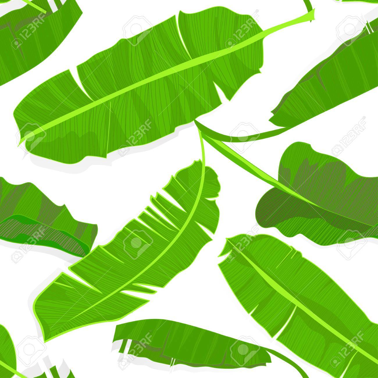 Seamless Hand Drawn Tropical Pattern With Palm Banana Leaves Jungle Exotic Leaf On White Background