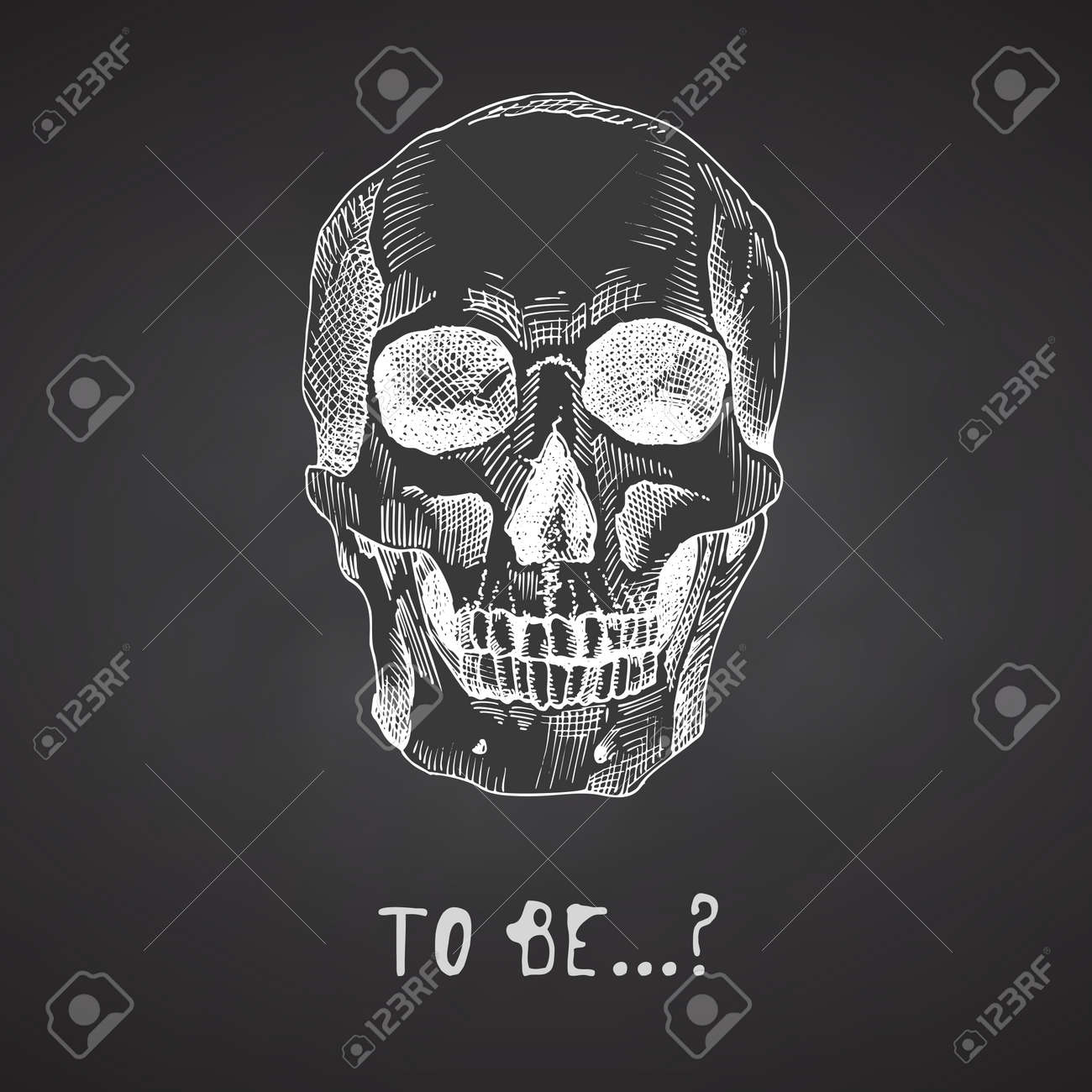 Hand drawn sketch human skull. Chalk graphic art isolated on calkboard background. Profile view of head. Engraving style. Vector - 160989619