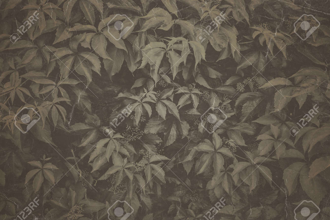 Fine art Vintage Plant texture. Grunge nature grass abstract background. Trendy overlay backdrop for create cute family photo, atmospheric child portraits and loving humans - 163875162