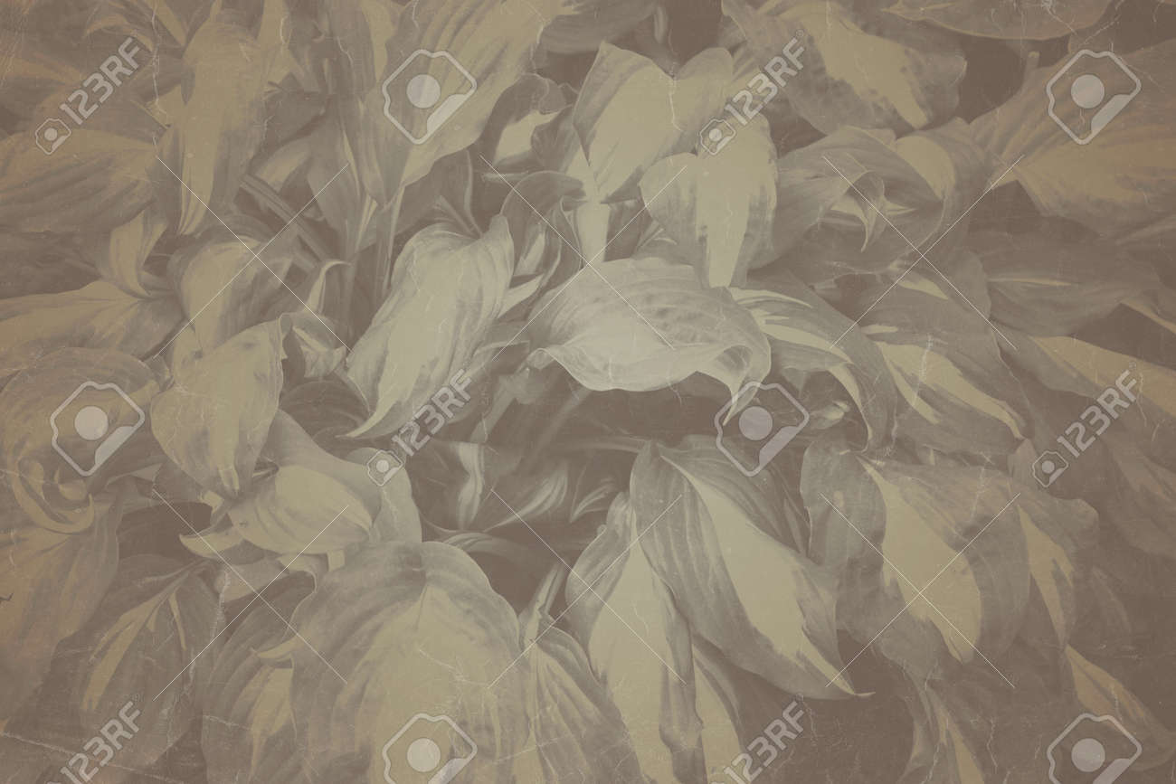 Fine art Vintage Plant texture. Grunge nature grass abstract background. Trendy overlay backdrop for create cute family photo, atmospheric child portraits and loving humans - 163875161