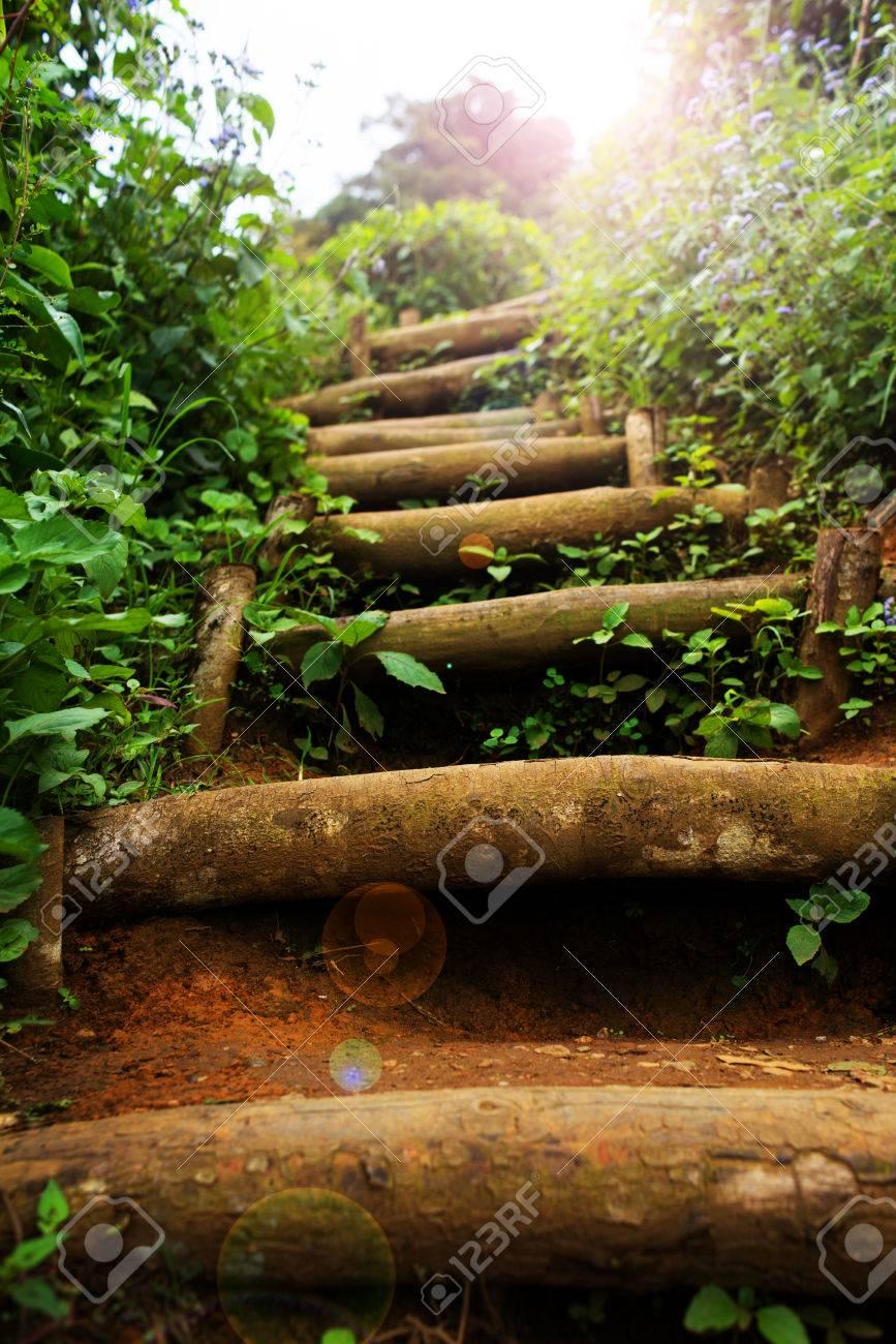 Escalier Naturel Au Jardin Extérieur De Verdure Banque D\'Images Et ...