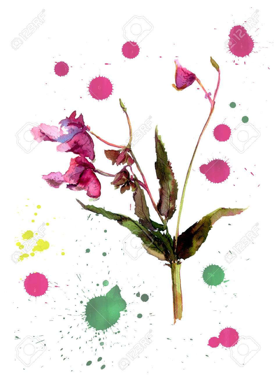 One Flower With White Background And Color Drops Watercolor Stock