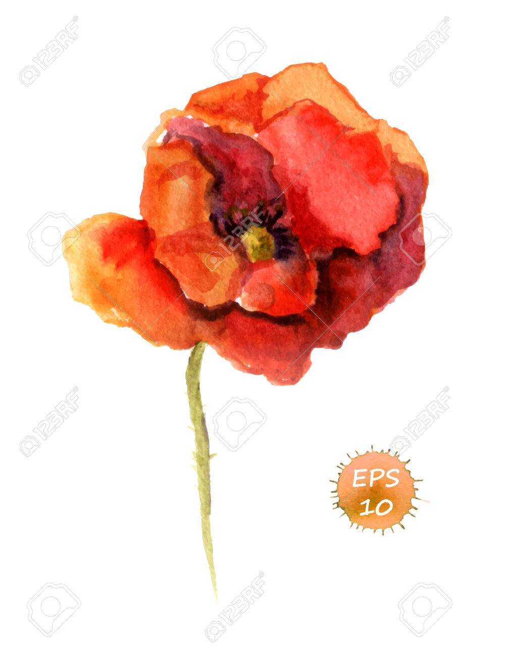 Poppy flower isolated watercolor hand drawing vector royalty free poppy flower isolated watercolor hand drawing vector stock vector 48269929 mightylinksfo