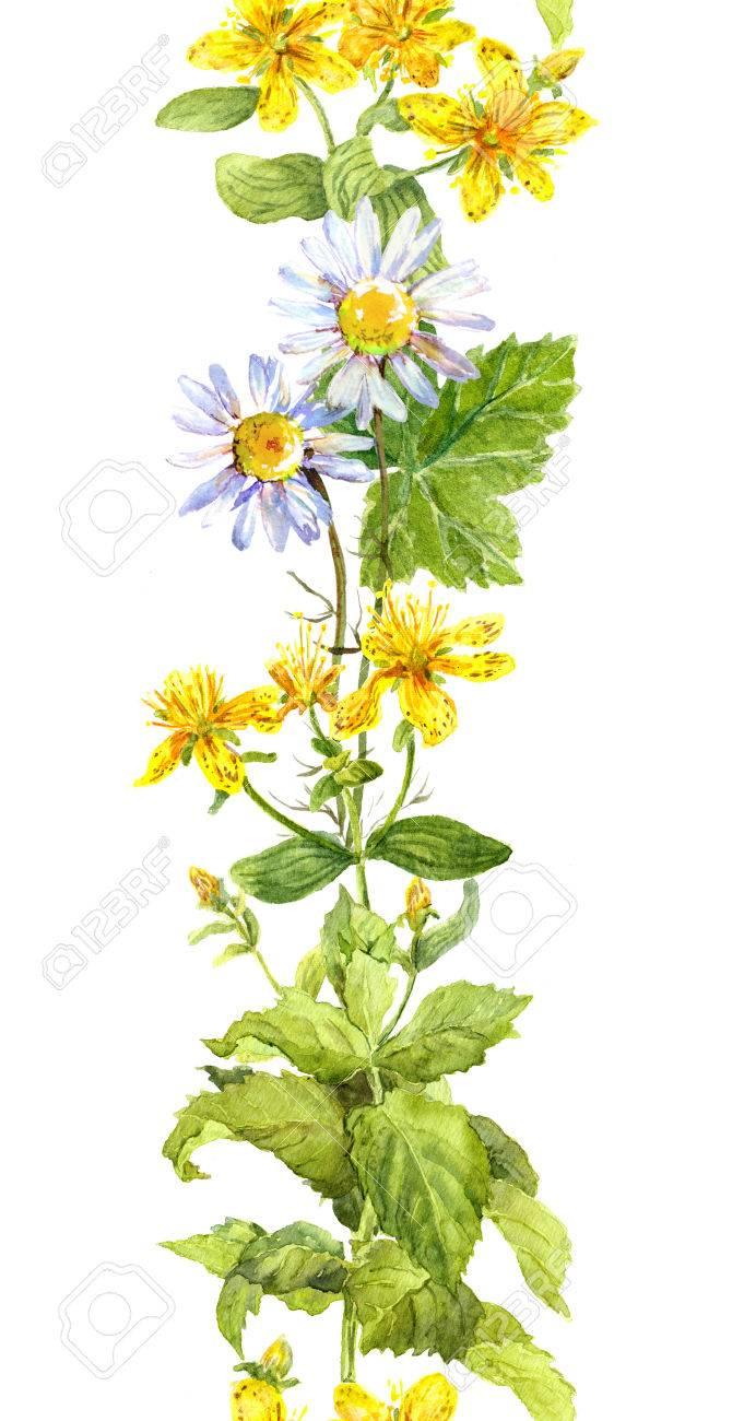 Flores, Hojas Y Hierbas Hipérico, Menta, Manzanilla. Marco De ...