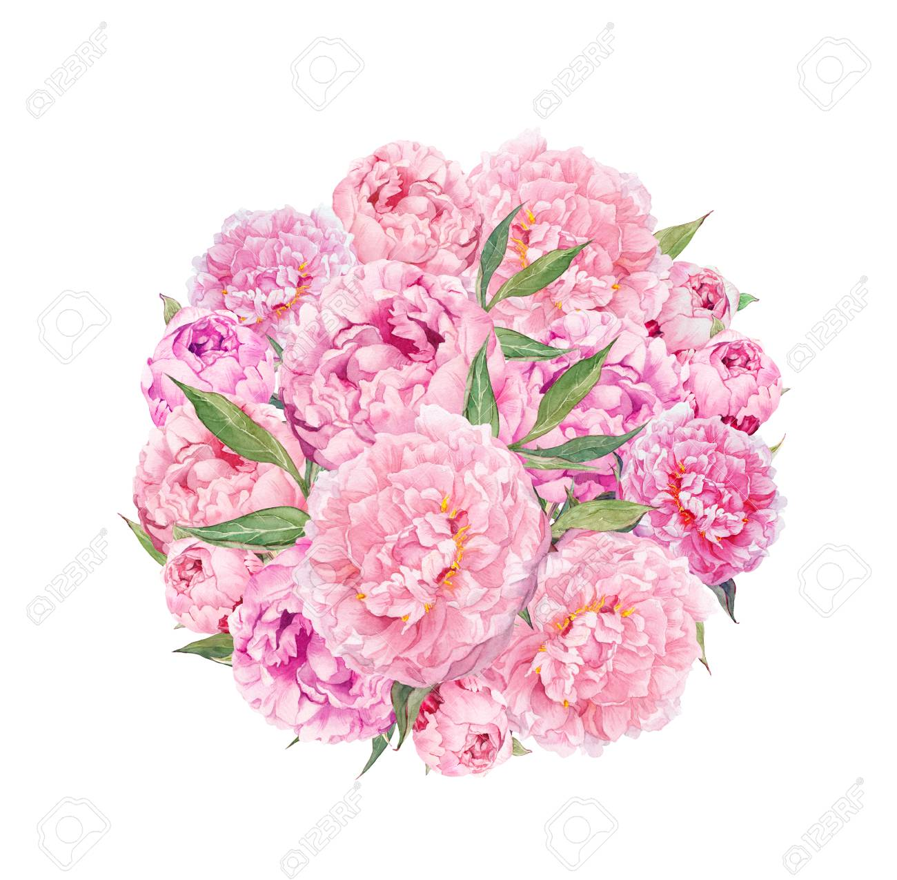 Floral Circle Background Pink Peony Flowers Watercolor Stock