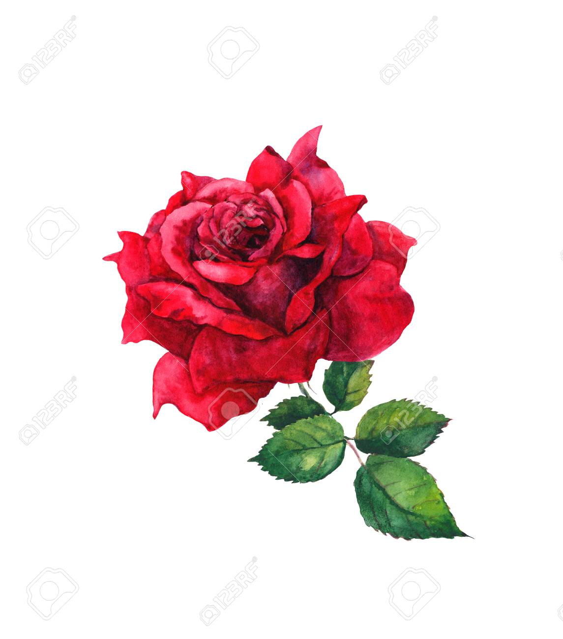 One Red Rose Flower Isolated Watercolor Painting Stock Photo
