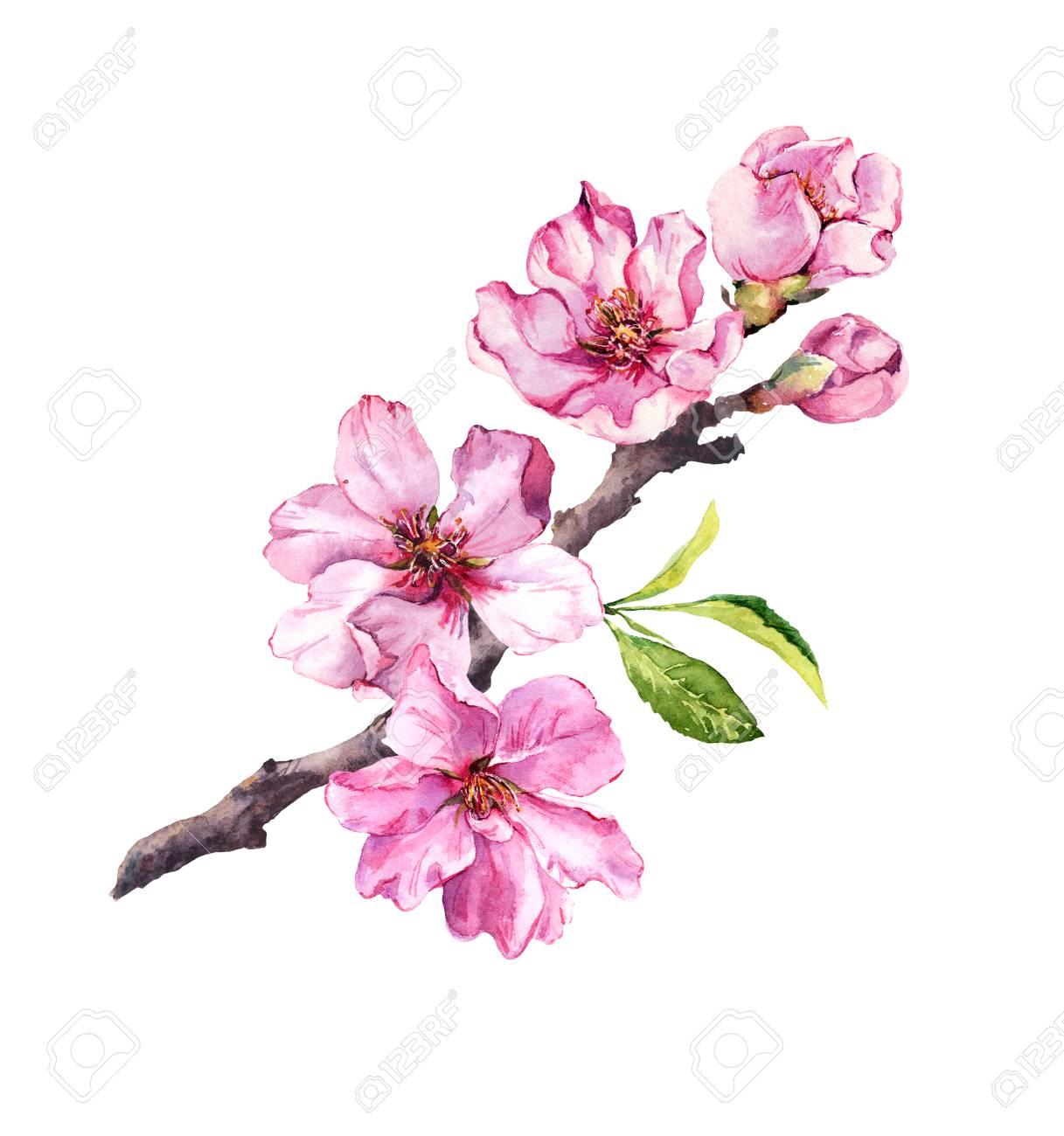 Flowering Cherry Tree Pink Apple Flowers Sakura Almond Flowers